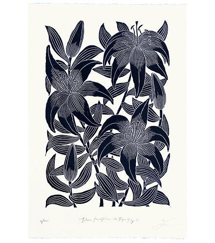 Lilium Lancifolium aka Tiger Lily II