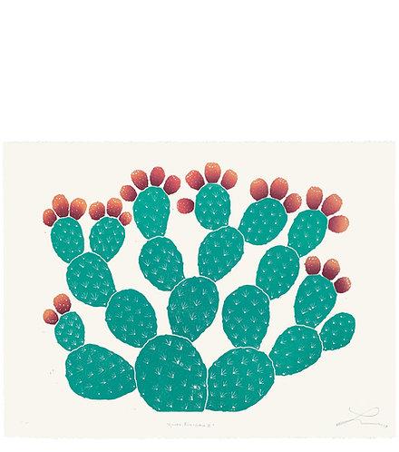 Opuntia Ficus-Indica II