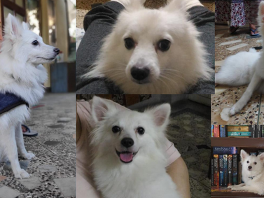 Rejoice, People, It Is The International Dogs Day!