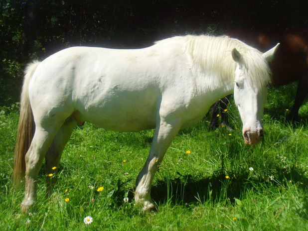 Cantal Cheval