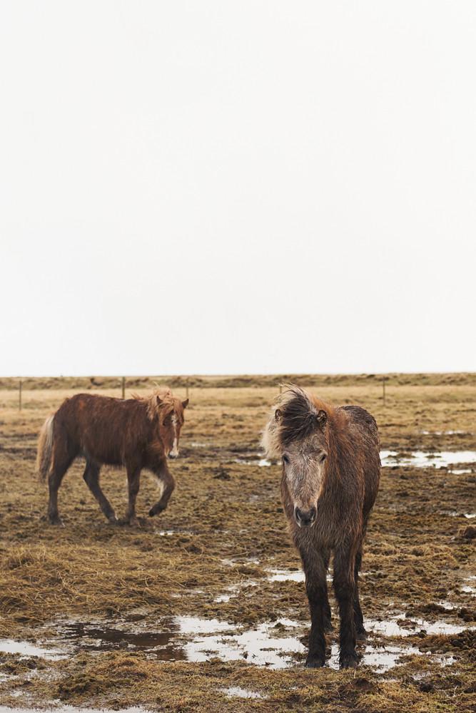 blog_Iceland_2015-92.jpg