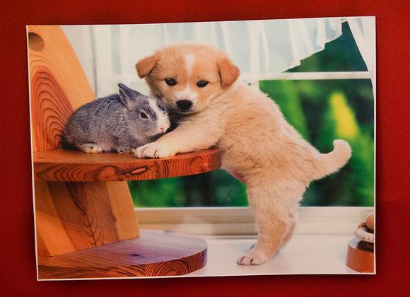 Perro y Conejo