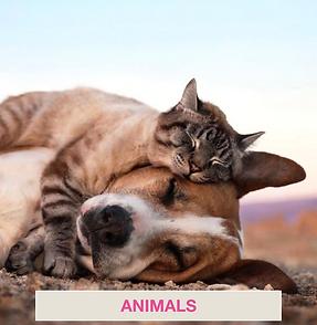 Catégorie belge Animaux/Animals