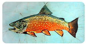 brook trout rounded.png
