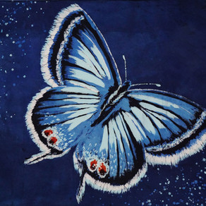 The Butterfly Trail Story (Ch.3~ The Eastern Blue & Red Spotted Purple)