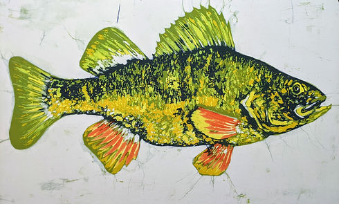 yellow perch.jpg