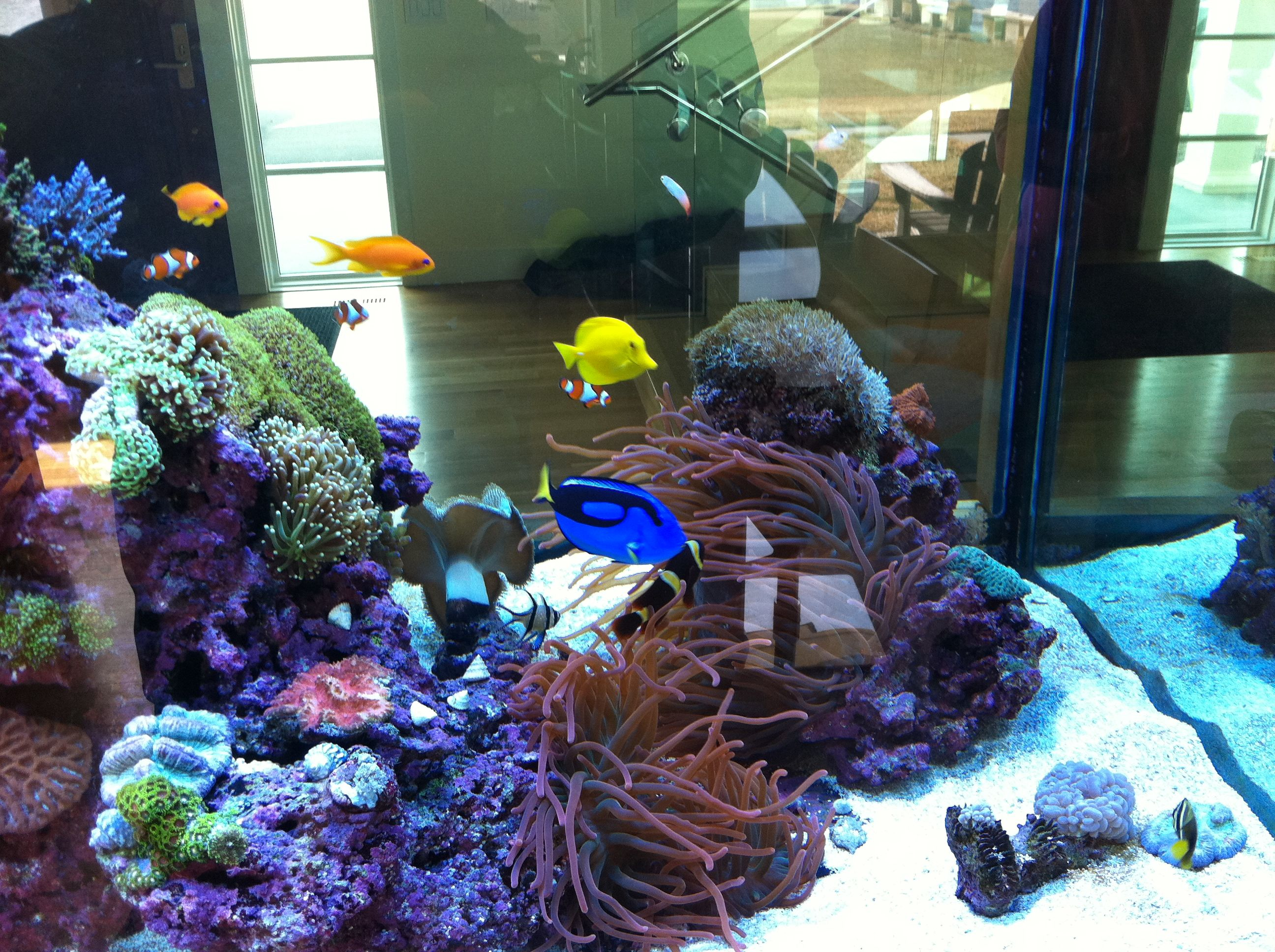 Saltwater Reef Aquarium Exhibit