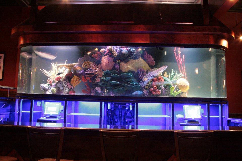 1200 Gallon Faux Reef Shark Tank
