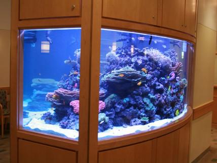 Fish Talk: Aquariums Heal