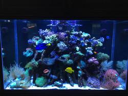 180 Gallon Reef Tank