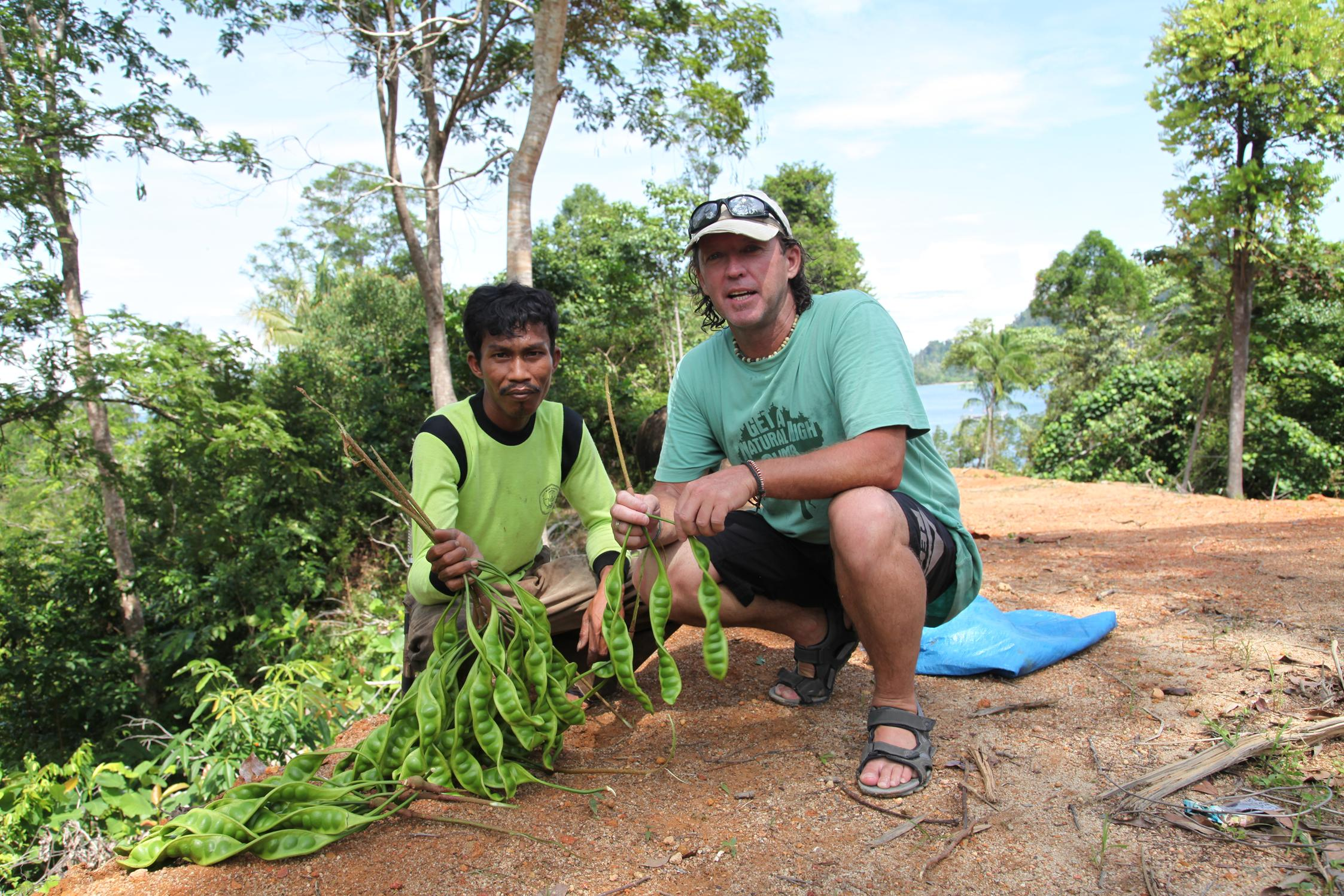 Wild patai bean collection