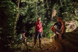 Gamaran Forest, Indonesia