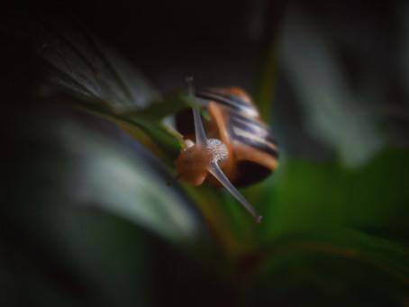 Snail 🐌