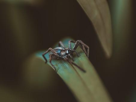 Spider 🕷️
