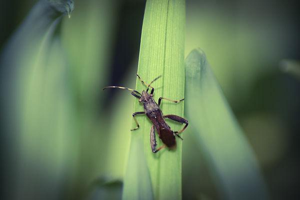 insecte_1.jpg