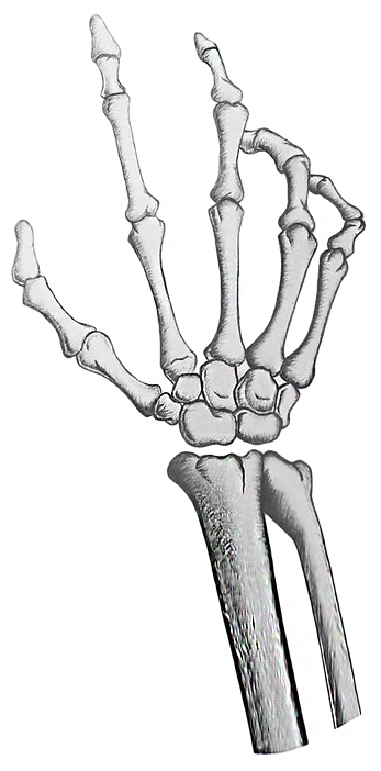 SkeletonHand.png