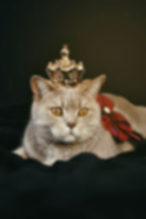 beige-cat-with-gold-colored-crown.jpg