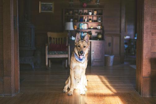 brown-dog-sitting-on-ground in Home.jpg