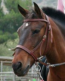 Sherman, cow pony