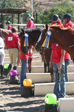 Horse show line up
