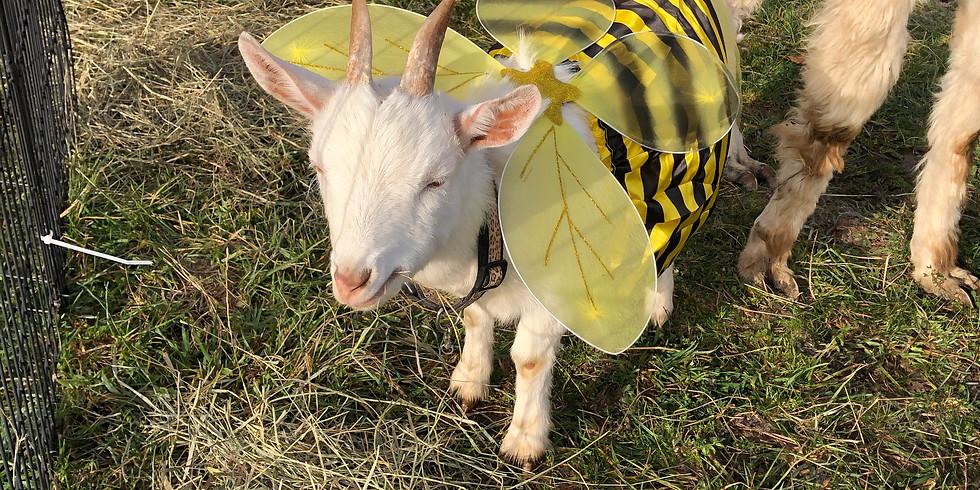 Halloween Yoga with Goats