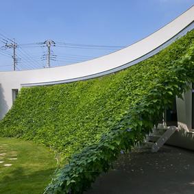Exterior: Toldo verde?