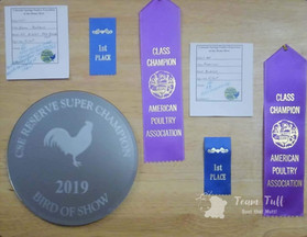 C.Springs Poultry Show 2019 (7).jpg