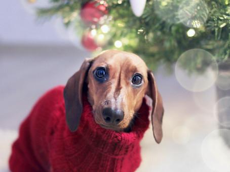 La journée mondiale du pull moche de Noël