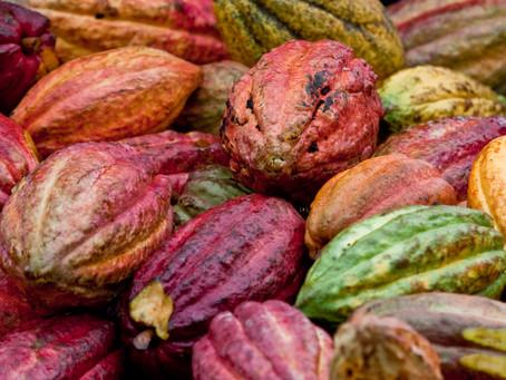 Que vous arriverait-il si vous ne consommiez jamais de cacao ?