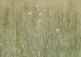 Inside grassy fields 2