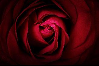 rose%20rouge%202_edited.jpg