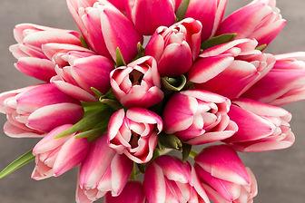 tulipes roses 2.jpg