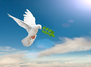 White Dove carrying leaf branch on blue