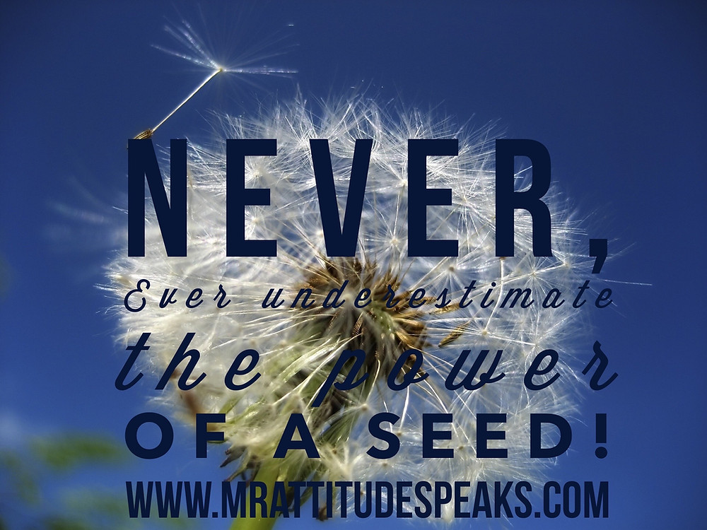 Never ever underestimate the power of a seed