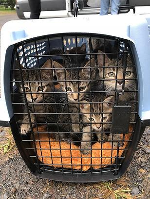 Keith & kittens.jpg