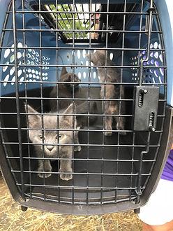 Keith & Kittens2.jpg