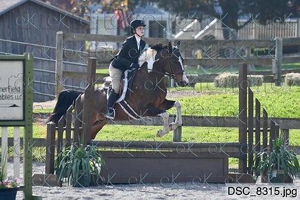 HorseShowPhotography1.JPG