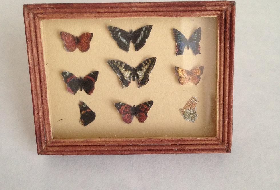 Butterflies in a Frame