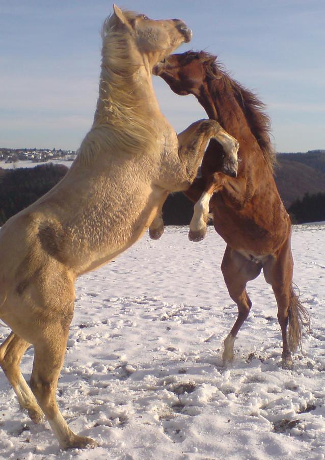 Ben&Lucky_Pferde im Schnee.jpg
