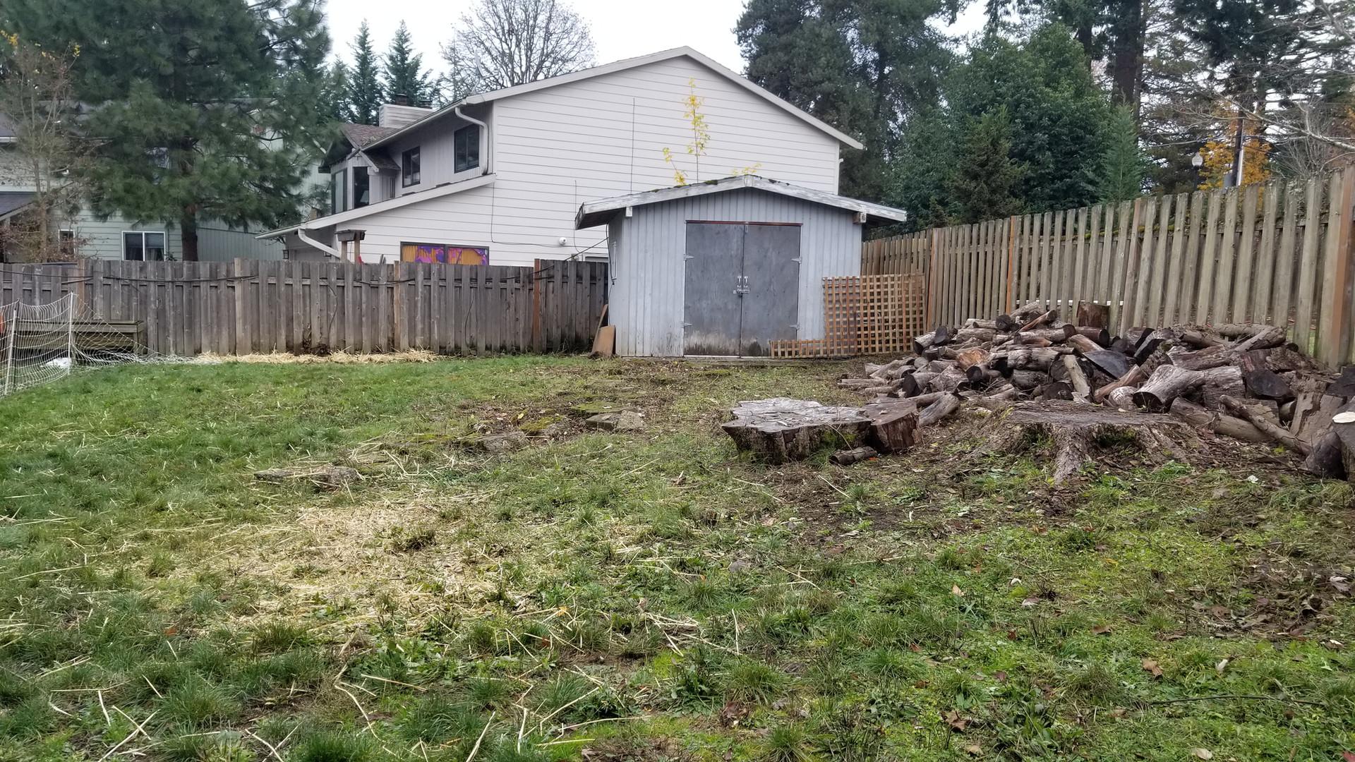 Back yard cleared!