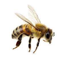 Juba on Honey Bees