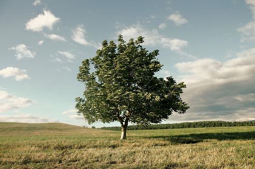 tree-1620921.jpg