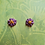 Thumbnail: Stud Flower Earrings