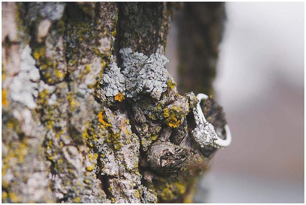 TREE RING ENGAGEMENT