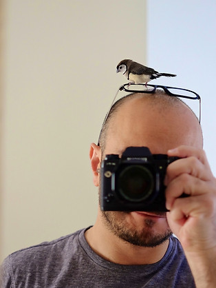 FInch on my Head