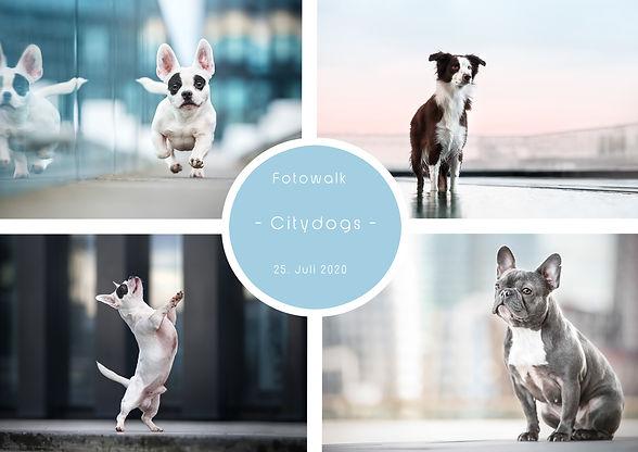Citydogs-Fotowalk.jpg