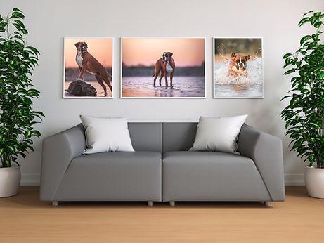 Foto Fotograf Wandbild Leinwand Acryl Alu Dibond Tierfotograf Solingen Köln Remscheid Wuppertal Hundefotograf Pferdefotograf