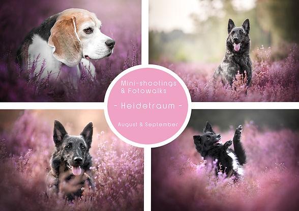 Heidetraum-Mini.jpg