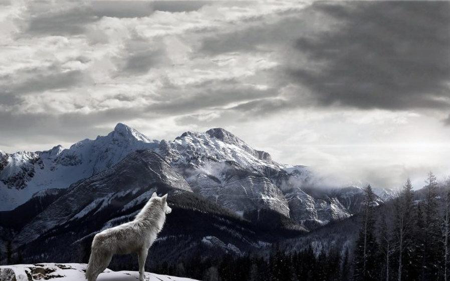 360498-mountains-wolf-landscape-clouds-snow-mist-748x468.jpg