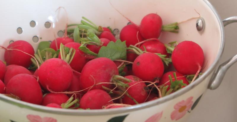 La recette de la crème de fanes de radis